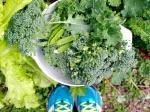 Super Green Spring Salad // Big Eats Tiny Kitchen